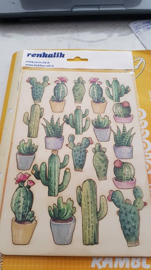 SWEET WOOD CACTUS A5